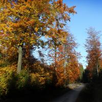 Waldnaabtal im Herbst