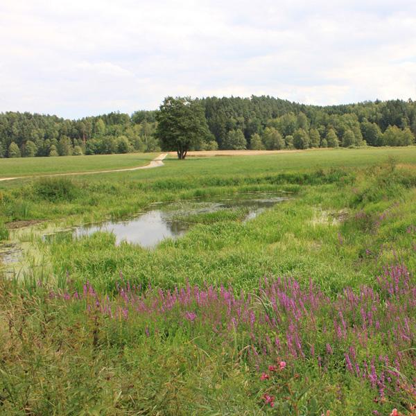 q-landschaft